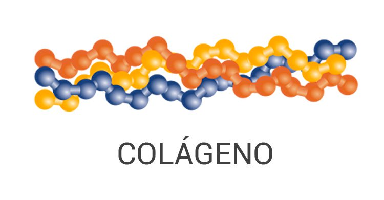 proteina de colageno